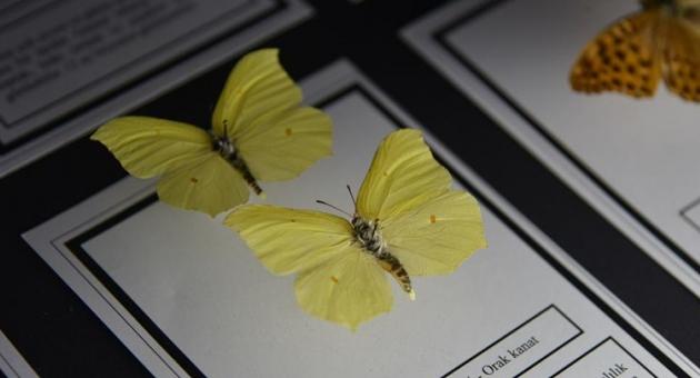 Böcek müzesine 45 bin ziyaretçi