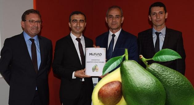 Avokado Endüstriye Dönüştürülecek