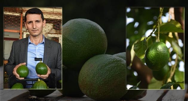 Güzelleşmek isteyenlere özel meyve