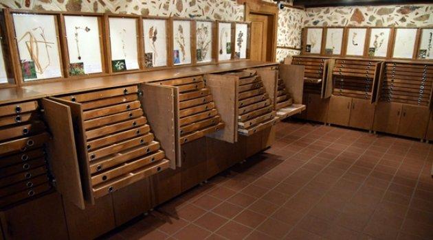 Alanya Herbaryum Müzesi'ne Ziyaretçi Akını