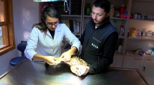 Antalya Yaralı Kızıl Şahin Tedavi Edilip, Doğaya Salındı