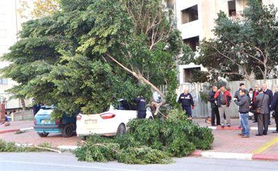 Antalya'da Fırtına Ağaç Devirdi