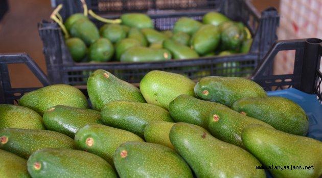 Avokado Polonya'dan Sonra Ukrayna Yolcusu