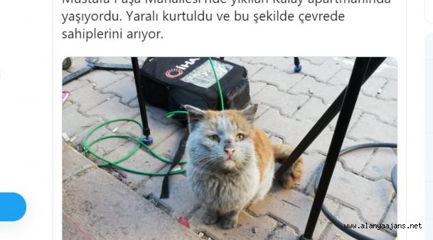 Depremzede Kedi Antalya'ya Getirildi