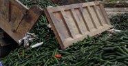 Alanyalı üretici 13 kamyon salatalığı çöpe döktü!