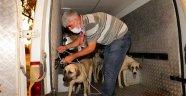 Alanya Belediyesi hayvanlara yardım eli uzattı