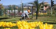 Alanya'da baharın habercisi çiçekler boy gösterdi