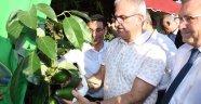 Antalya Üretimin Yüzde 81'ni Karşılıyor