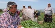 Antalya'da 19 bin 650 kadın çiftçiye eğitim verildi