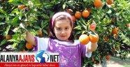 ANTALYA'DA AÇIKTA ÜRETİM YERİNİ SERALARA BIRAKIYOR