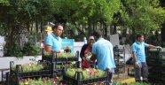 Belediye 55 bin çiçek dağıtacak