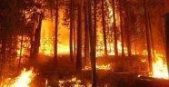 Gündoğmuş'taki orman yangınında 6 hektar Kızılçam ormanı zarar gördü