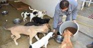 Hayvan Barınağı Türkiye'ye Örnek Oldu