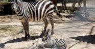 Hayvanat Bahçesi'nde Bahar Havası