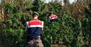 Jandarma'dan Konaklı'da uyuşturucu operasyonu