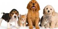 Petshop Sahiplerine Eğitim Verilecek