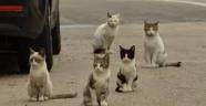 Polisten Yavru Kedi İçin Duyarlı Davranış