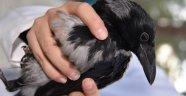 Yabani kuşlar tedavi edilip doğaya bırakıldı