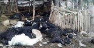 Yıldırım düşmesi sonucu 35 keçi telef oldu