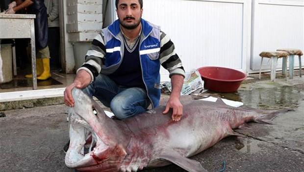 Alanya'da Yabancıların Gözdesi Köpekbalığı Eti