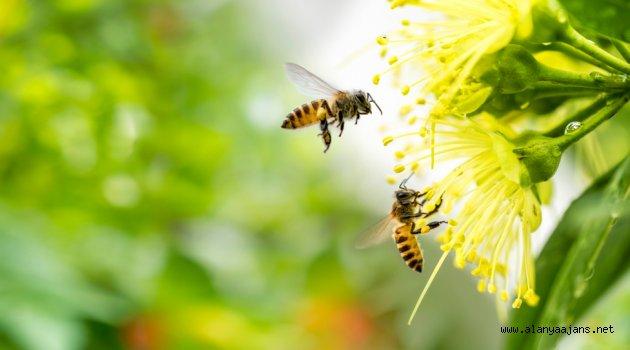 Yaz mevsiminde alerjiye dikkat!