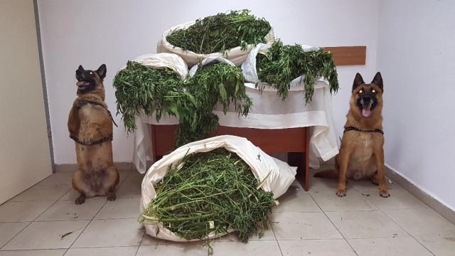 Narkotik Köpeği Uyuşturucu Buldu